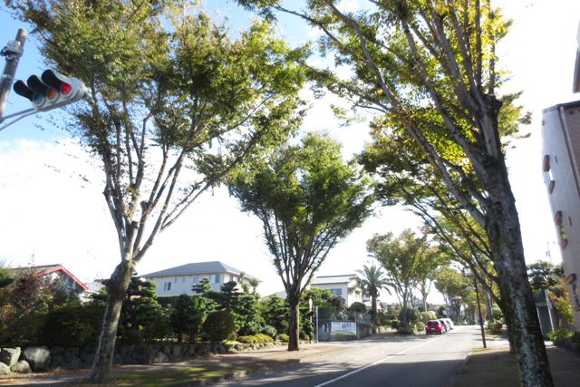 県立美術館前駅のエリア情報3