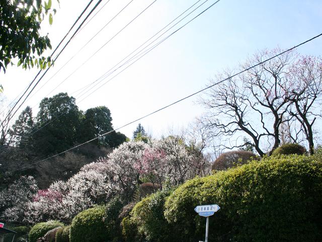 百草園駅のエリア情報4