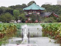 東京大学 本郷キャンパス写真5